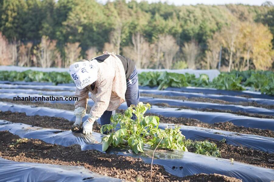 ngành nông nghiệp phù hợp với người có tuổi