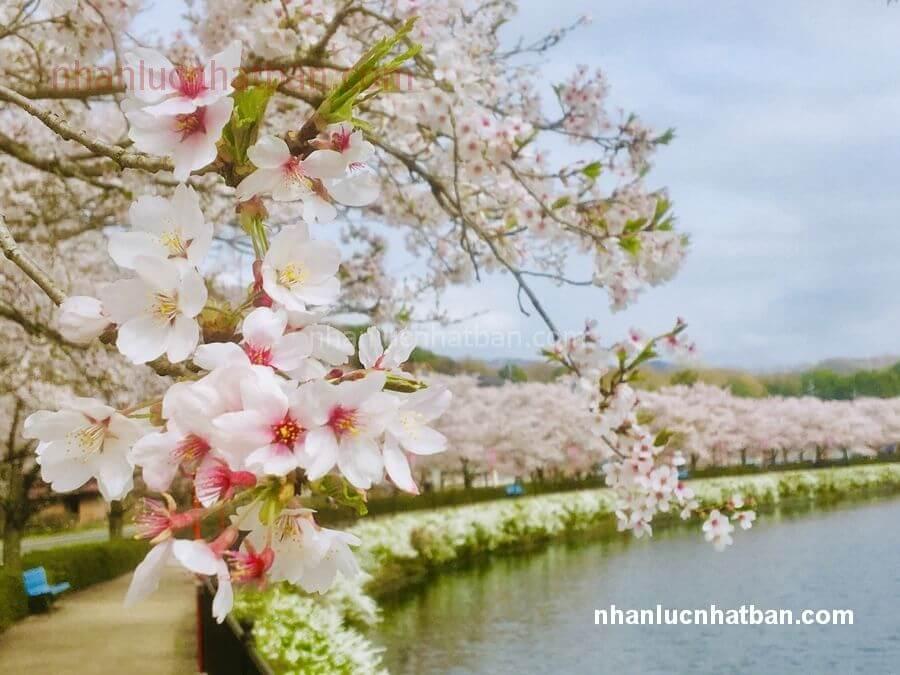 Khí hậu và thời tiết Hiroshima