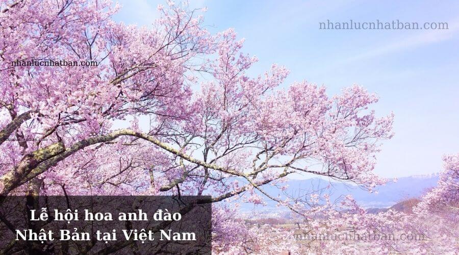 Lễ hội hoa anh đào Nhật Bản tại Việt Nam