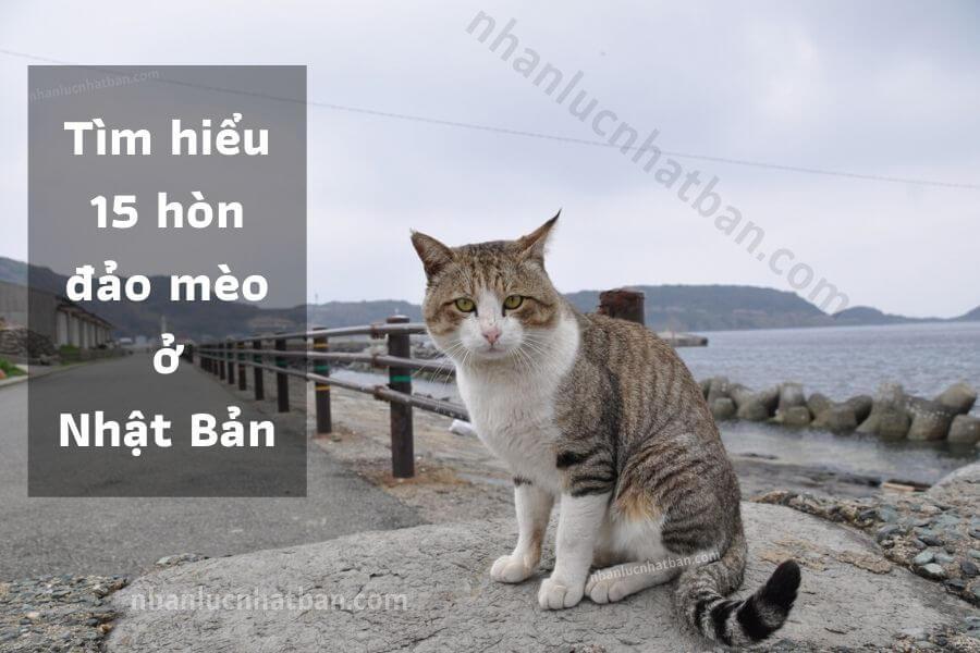 Đảo mèo ở Nhật Bản